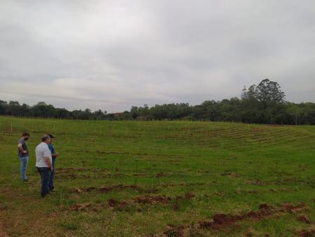 Município planta 2,1 mil mudas de árvores nativas