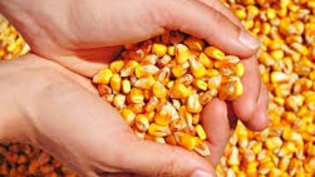 Últimos dias para retirada das sementes do troca troca