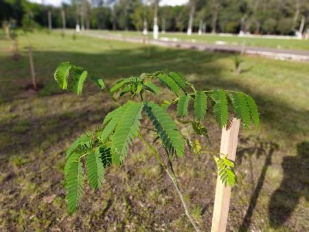 Parque poliesportivo recebe 100 mudas de árvores nativas